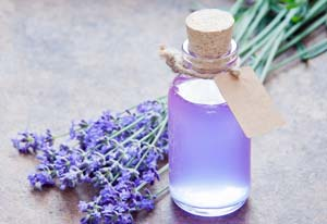 smell of lavender